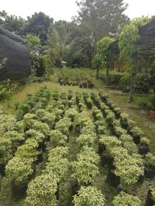 vitka gardenia_190122_0014