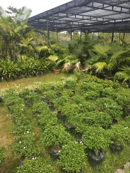 vitka gardenia_190122_0015