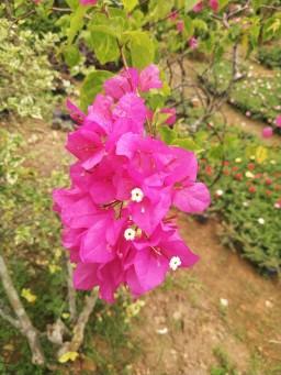 vitka gardenia_190122_0026