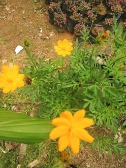 vitka gardenia_190122_0030