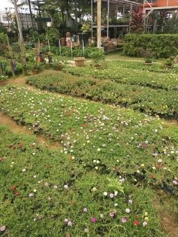vitka gardenia_190122_0031