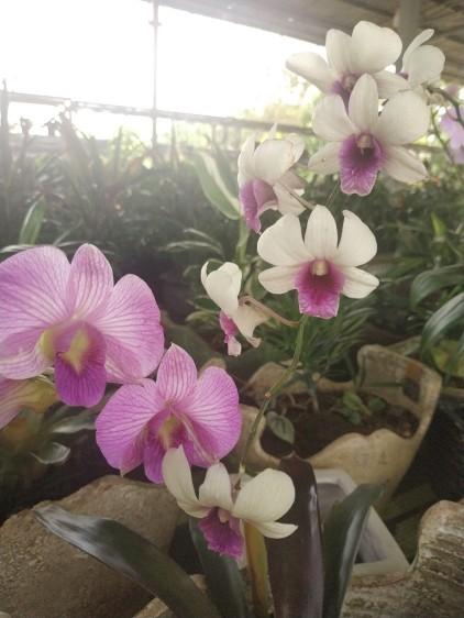 vitka gardenia_190122_0058