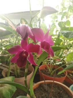 vitka gardenia_190122_0060