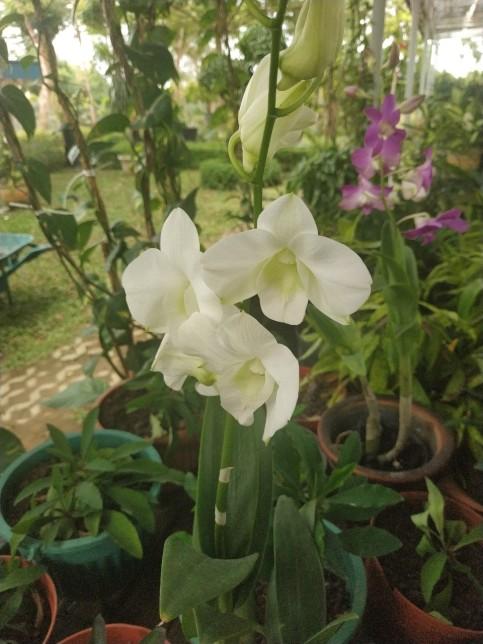 vitka gardenia_190122_0061